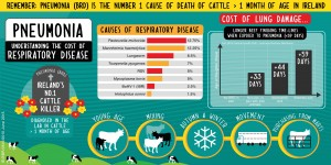 Pneumonia is the number one killer of cattle in Ireland