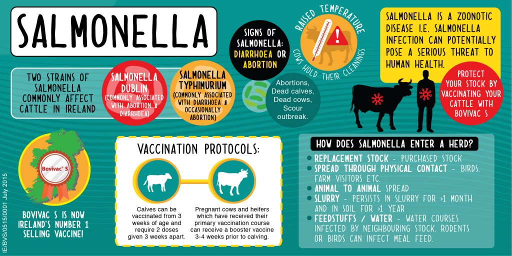 Salmonella is a zoonotic disease