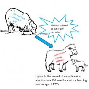 Impact of abortion on 100 ewe flock