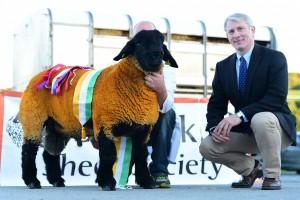 Supreme Champion of the show winning the Novice ram lamb class, Liam McGonigle