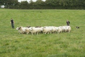 Michael McHugh, Co. Monaghan shows how vaccination has helped sheep diseases such as footrot