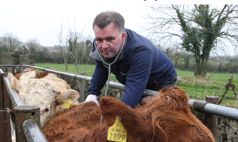 Veterinary practitioner worked with farmer to remove BVD threat