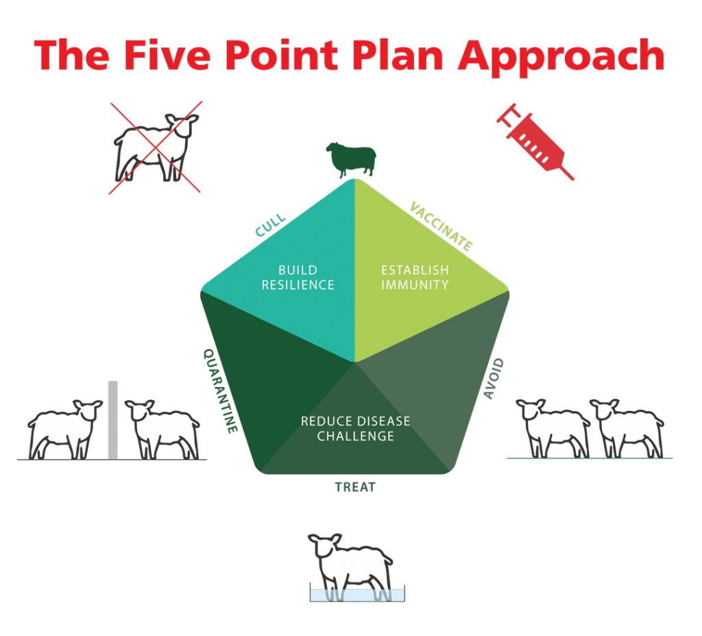 This image has an empty alt attribute; its file name is Five-Point-Plan-graphic-1024x927.jpeg